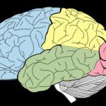 michigan-brain